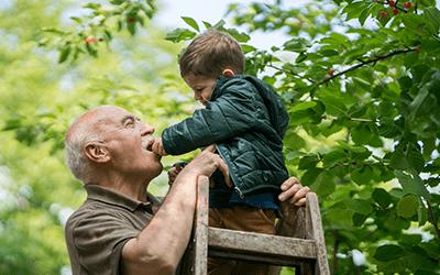 Enkel fütter Opa mit Kirschen vom Baum